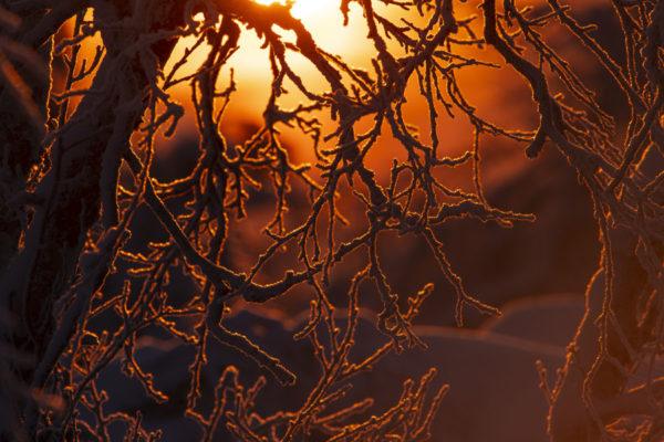 Lumière de Laponie