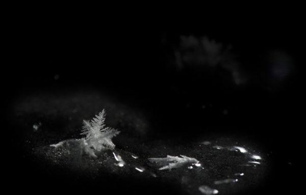 Flocon de neige en Laponie