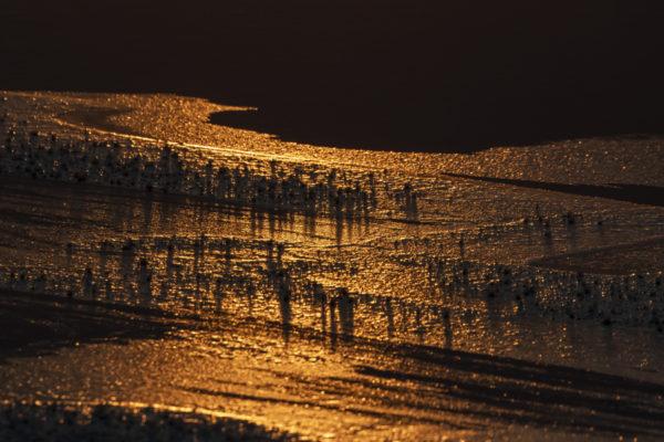 Lumière sur l'île de Senja