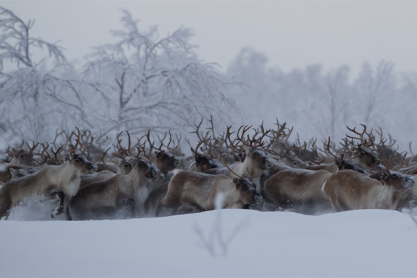 Rennes en Laponie